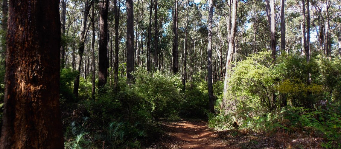 Bush track in forest at Dwellingup