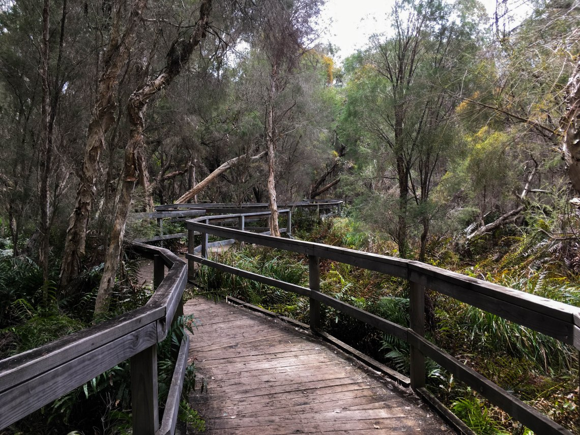 Walk trail through dense wetland in Gingin