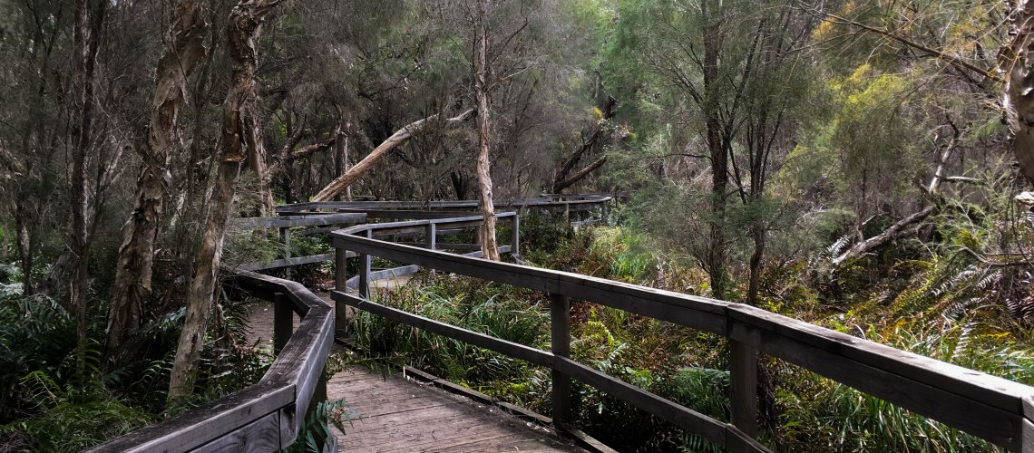 Walk trail through dense wetland in Gingin