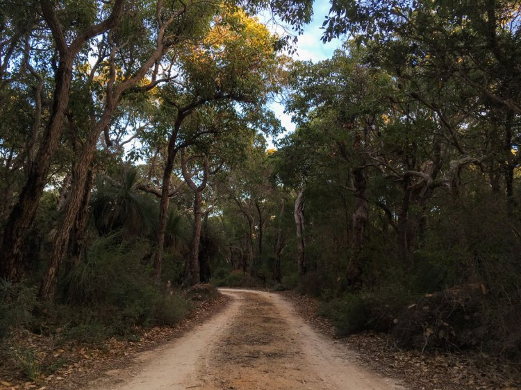 Entrance road to Isaacs campsites
