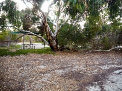 Camping areas under shade