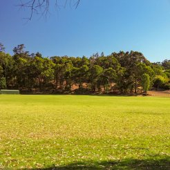 View from our site of the sports oval
