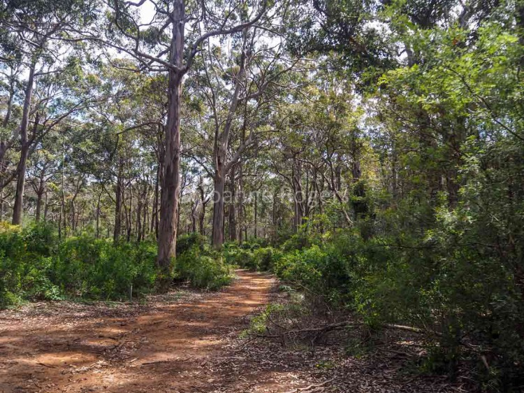 Cape to Cape track in Boranup forest