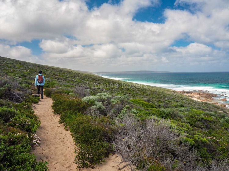 Man walking along the Cape to Cape Track
