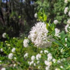 flowers-boranup